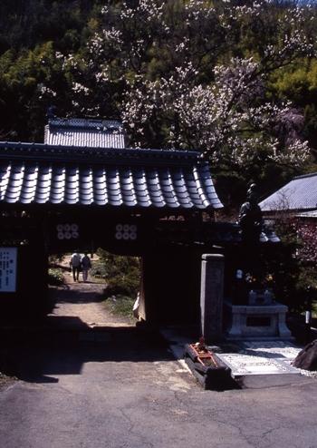 FWmatsushiroRG098(1).jpg