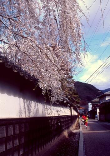 FWmatsushiroRG215(1).jpg