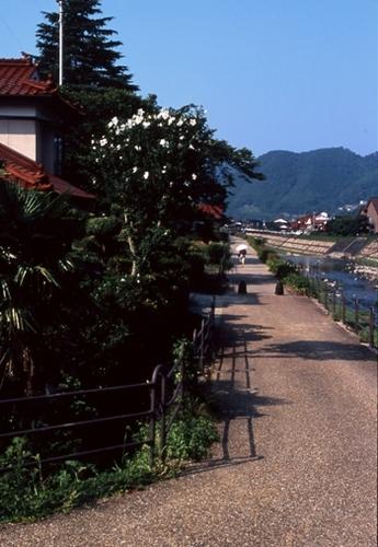 FWtsuwanoRG007(2).jpg